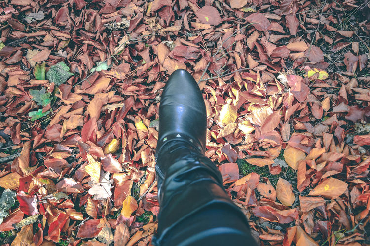 Low Section Personal Perspective Human Leg One Person Human Body Part Real People Body Part Shoe High Angle View Plant Part Leaf Leaves Nature Autumn Leisure Activity Human Foot Leather Land Autumn Autumn colors Autumn Leaves autumn mood Autumn🍁🍁🍁 Brown Leaves Black Boots