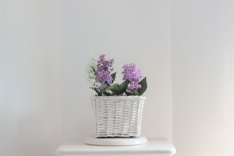 Essential day today. Essential Flower Flower Head Freshness Green Home Interior Indoors  No People Plant Purple Table Vase Vimini Wall - Building Feature Water White