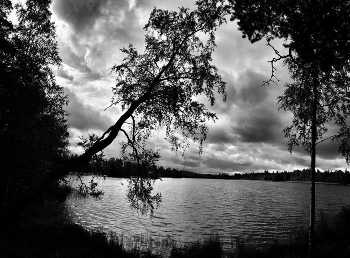 Curved Tree by