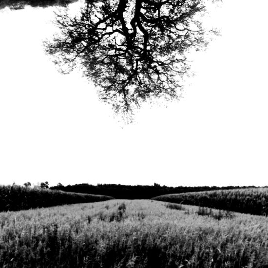 Blackandwhite Phsycedelic Tree Field