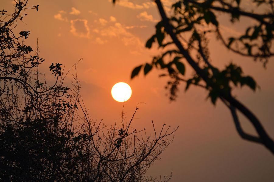Sunset Sunset And Trees Nature Orange Sunset Sun In The Sky
