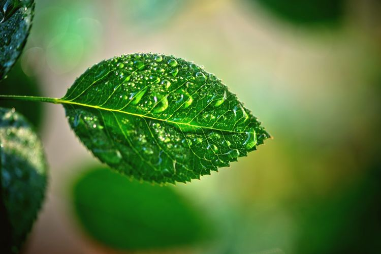 Plant Part Leaf Close-up Green Color Focus On Foreground Drop Wet Water Plant Nature Day Leaf Vein Beauty In Nature RainDrop
