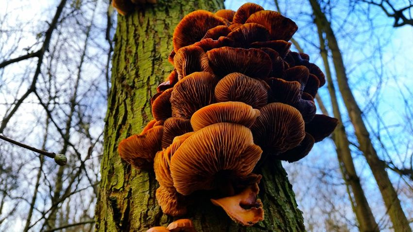 Mushrooms Mushrooms 🍄🍄 Mushrooms Gallery Natural Beauty Forrest Photography Mushroom Mushroom Man EyeEm Best Shots - Nature Nature_collection Eyem Nature Nature Photography Netherlands EyeEm Nature Lover Forrest