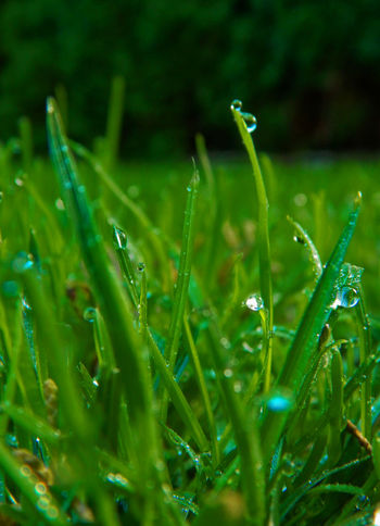 Beauty In Nature Close-up Drop Freshness Grass Green Color Growth Nature No People Outdoors Plant Water Wet