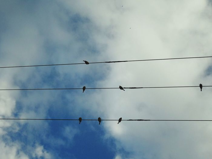 Cable Power Line  Bird Connection Technology Electricity  Power Supply No People Telephone Line Cloud - Sky Animal Themes Animals In The Wild Outdoors Animal Wildlife Day Electricity Pylon Sky Fuel And Power Generation Perching Nature Visual Creativity