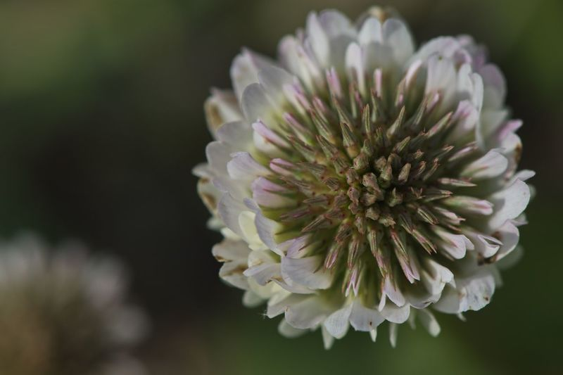D5500 Flower Flowering Plant Plant Freshness Growth Close-up