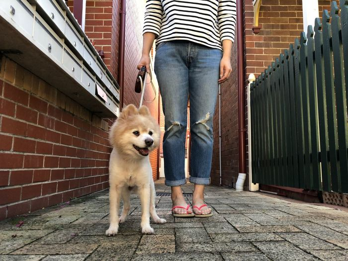 Weekend Walkie. One Animal Mammal Domestic Animals Pets Canine Domestic Dog