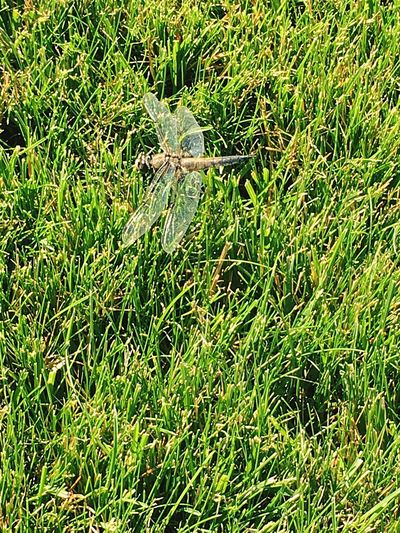 One Animal Grass Nature Outdoors Animals In The Wild Green Color Animal Themes Reptile Day No People Close-up