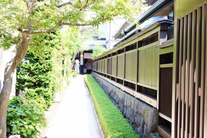 Japan Feelsogood Kamakura First Eyeem Photo Canon Green