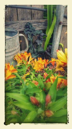 Garden Photography Hanging Out Taking Photos Flowers,Plants & Garden Backyardphotography Googleedit Samsung Galaxy S5 Noworktoday EyeEm Best Shots Ladyphotographerofthemonth Flowerpower Eye4photography  Outdoor Photography Lady In The Garden Ladystatue