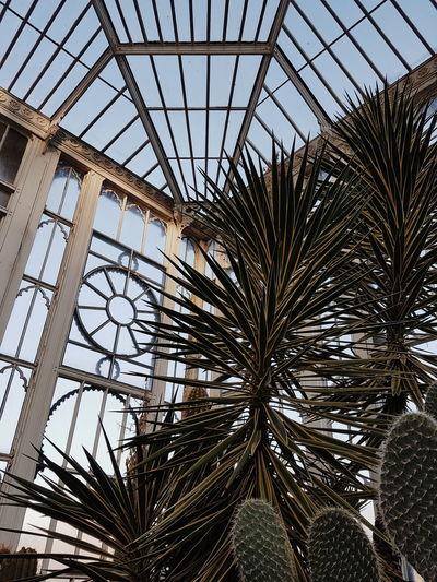Vscocam Vscocam Travel Photography Botany Botanical Gardens Sunday