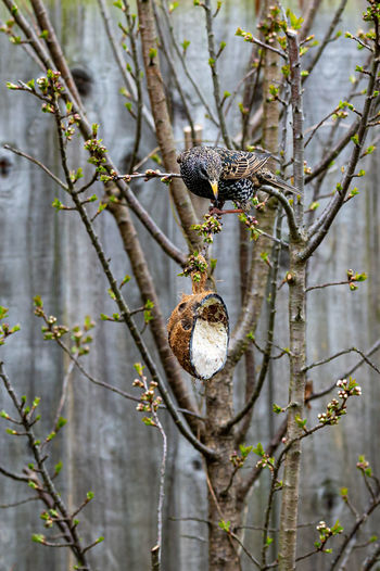 View of squirrel on tree