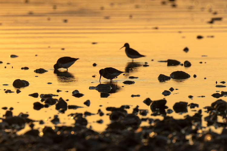Bird's silhouette in the shallow bank of the lake