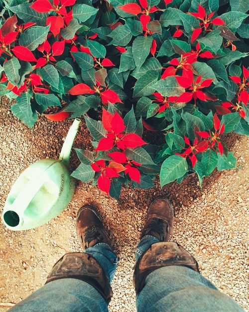 Colores Naturaleza Nochebuena Plants Plantas Trabajo Work Vivero