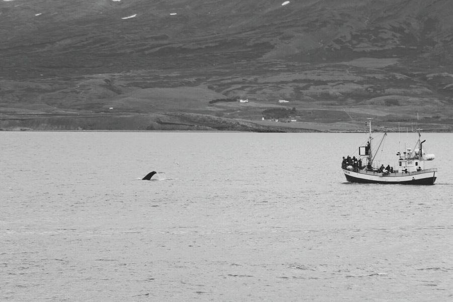 Whale watching auf Island Landscape Water Sea Outdoors First Eyeem Photo The Great Outdoors - 2017 EyeEm Awards Neighborhood Map Eyjafjörður Akureyri Iceland Whale Watching Whale Watching On Iceland EyeEmNewHere