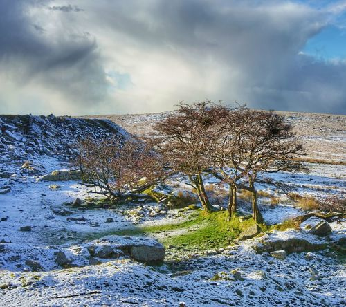 Cloud - Sky Sky Outdoors No People Nature Landscape Day Grass Beauty In Nature Pixelated Snow Cold Temperature Winter Scenics Frozen Tranquility Dartmoor National Park Landscape_photography Beauty In Nature Ice Weather Nature Environment Full Frame Tree