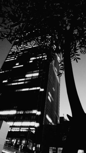 Japan Tokyomidtown Tokyo Park Days  Night Photography High Date Smartphonephotography AndroidPhotography Tree