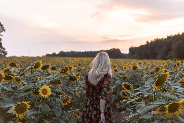 Rear view of woman standing amidst sunflowers on field against sky