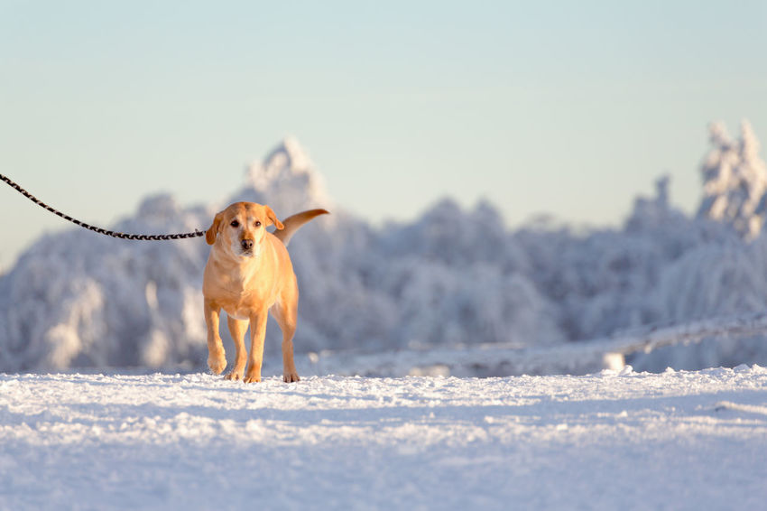 Out For A Walk Animal Themes Beauty In Nature Cold Temperature Day Dog Dogslife Domestic Animals Nature No People One Animal Outdoors Pets Snow Snow Day Winter