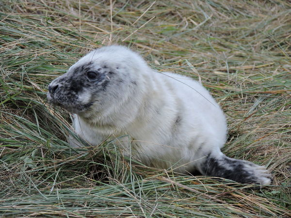 Animals In The Wild Beauty In Nature Day Donna Nook Eyeem Animal EyeEm Best Shots EyeEm Nature Lover Grey Seal Mammal Nature Nature No People One Animal Our Best Pics Outdoors Seal Seal Pup Wildlife Photography