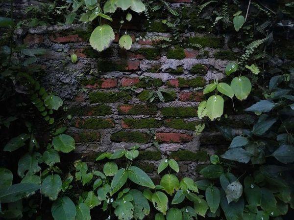 wall Darkwall Block Darkness Wall Leaf Growth Plant Day