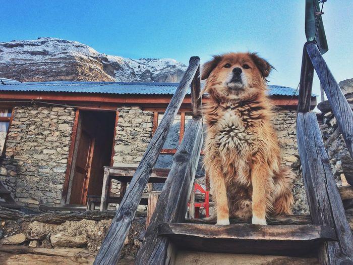 Annapurna Circuit Trek in Nepal Annapurna Manang Himalyas Mountain