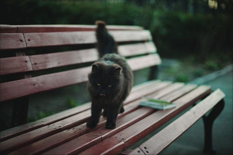 Portrait of cat standing on bench