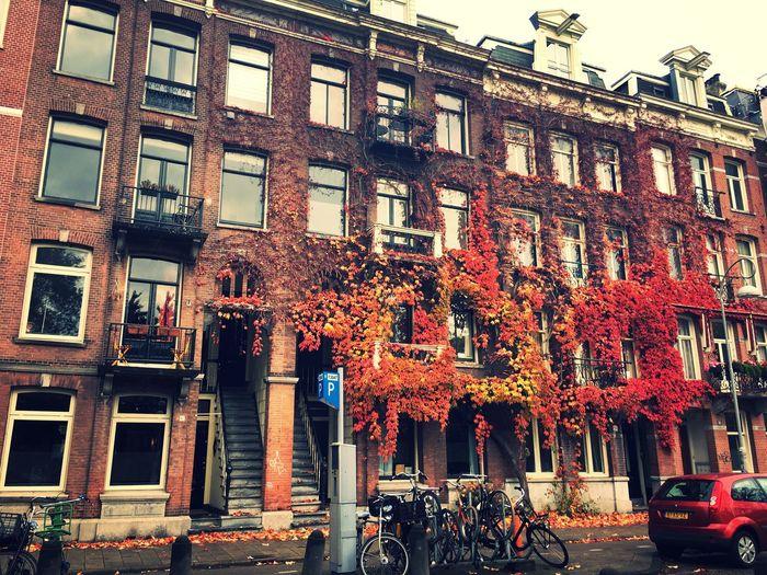 Red Amsterdam