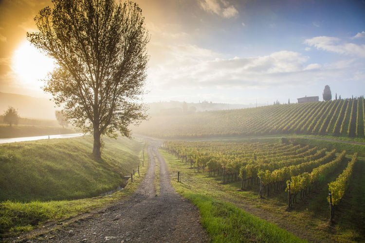 Scenic view of vineyard against sky during sunrise