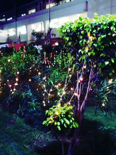 Festival Season Festival Of Lights Lights Nightphotography Night Lights