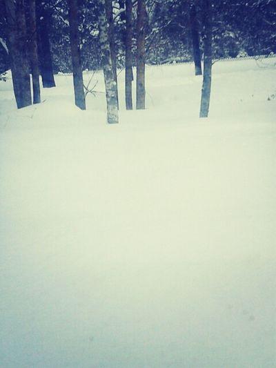 Winter Snow Want Summer