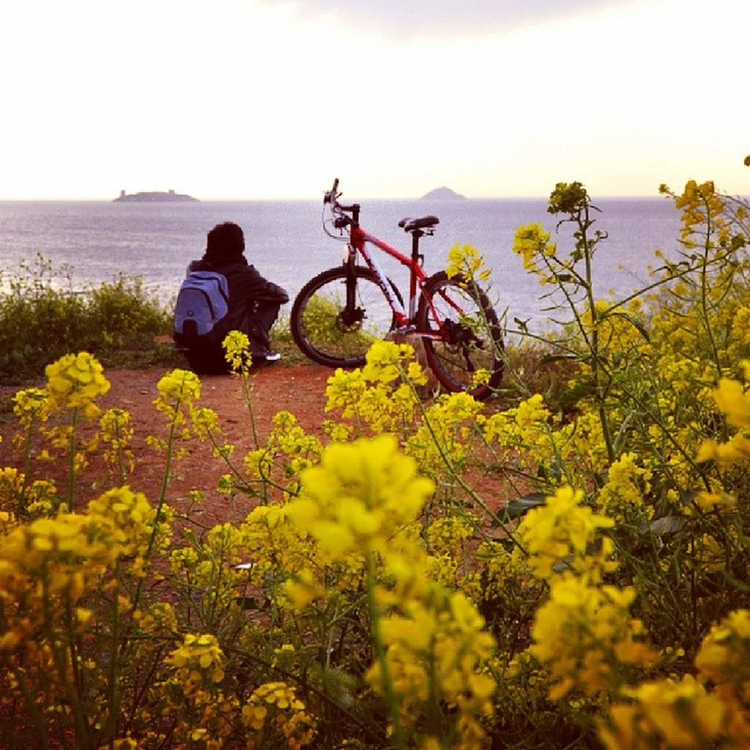 flower, water, beauty in nature, sea, nature, tranquil scene, tranquility, yellow, horizon over water, scenics, plant, growth, leisure activity, clear sky, lifestyles, sky, freshness, idyllic