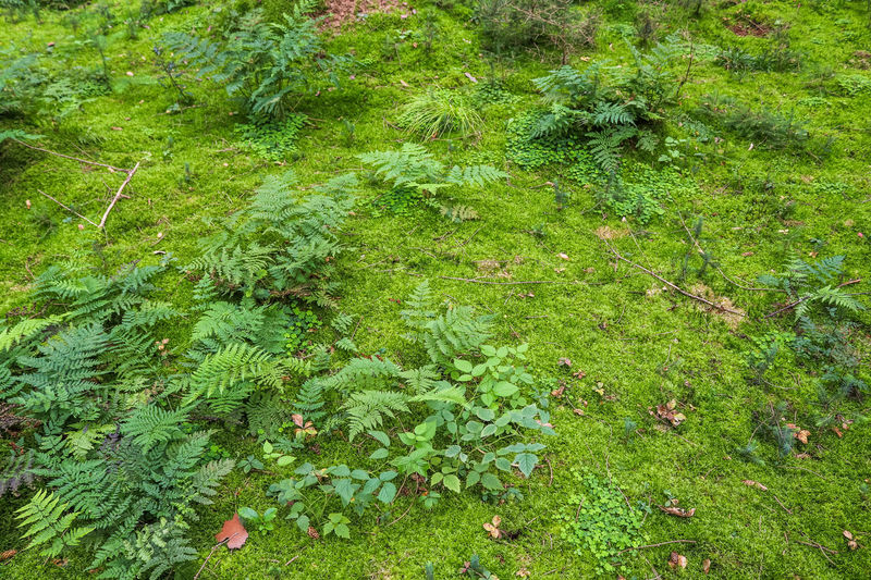 High angle view of trees growing on field