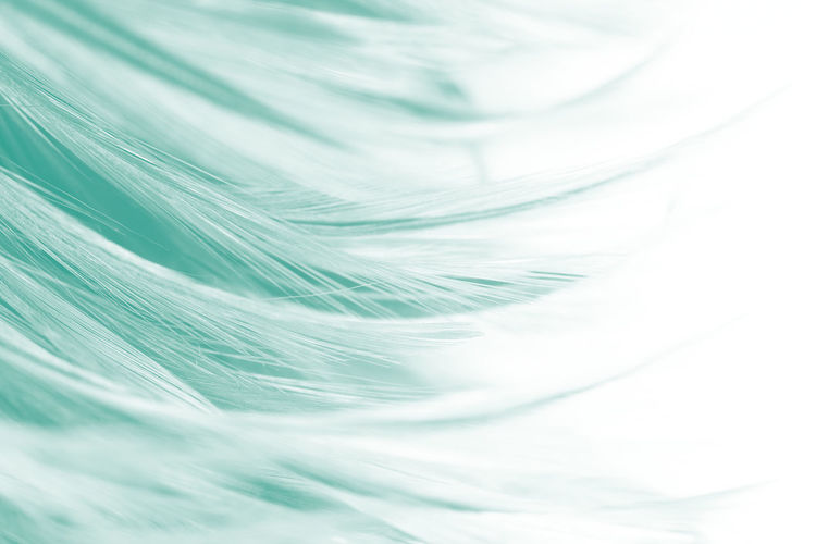 Backgrounds Full Frame Softness Close-up Fragility No People Vulnerability  White Color Abstract Freshness Abstract Backgrounds Simplicity Textile Pattern Textured  Selective Focus Nature Green Color Studio Shot Extreme Close-up Lightweight Soft Focus Textured Effect