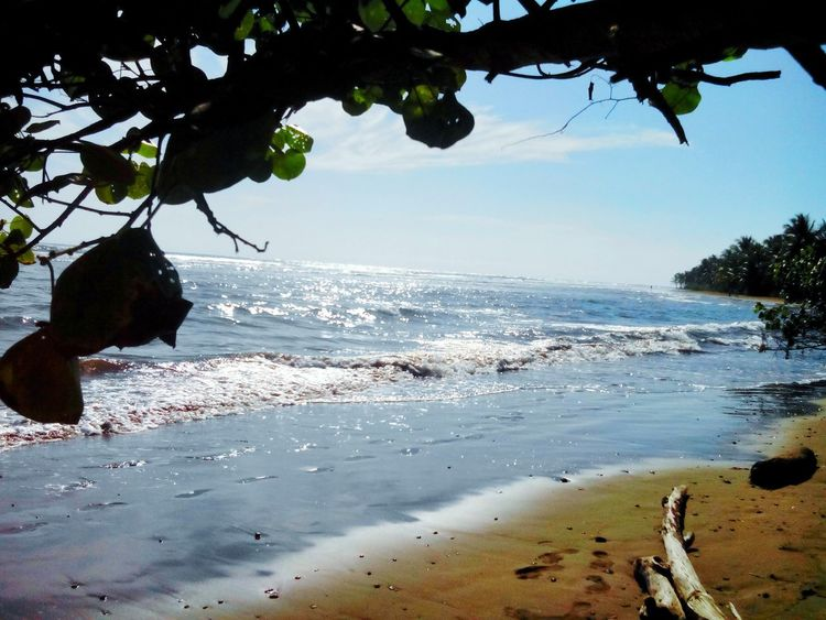 Beach Tree Sea Water Tranquility Nature Beauty In Nature Sand Outdoors Scenics No People Horizon Over Water Summer Vacations Day Sky Travel Destinations Landscape Costa Rica Costa Rica❤ Sunlight ☀ Ocean Clouds And Sky Nature Photography Bahía Ballena