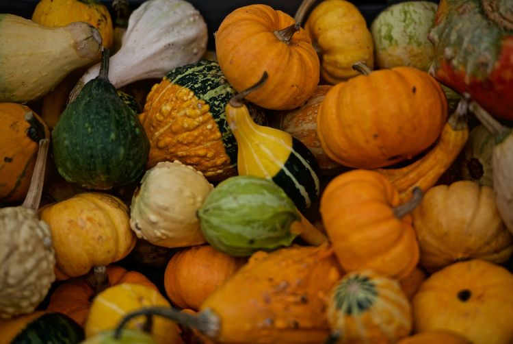 In Stockholm Sweden Autumn Food And Drink Halloween Day Food No People Pumpkin Small Pumpkins Vegetables