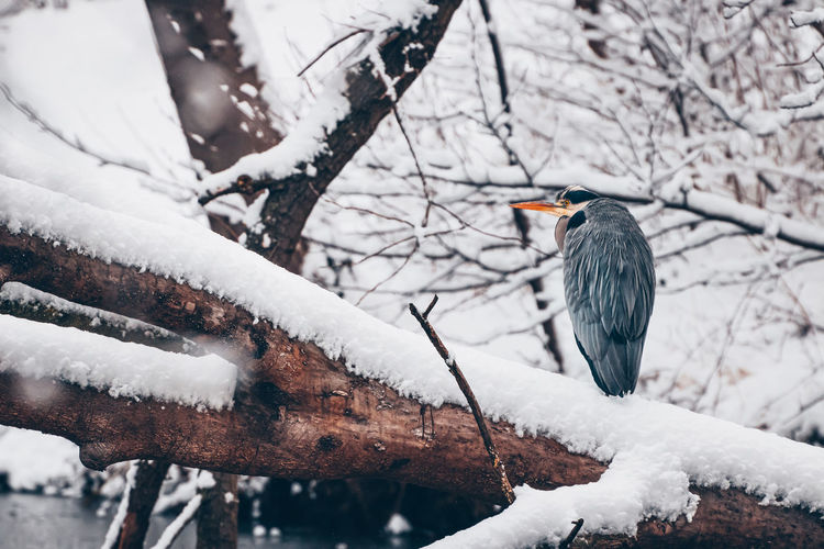 Bird perching on snow covered tree