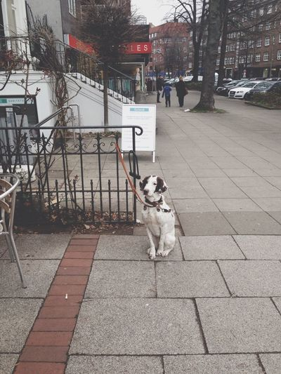 Dogs Waiting For Owner