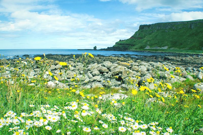 Colour Of Life Summer Ireland Giant's Causeway Flowers Life Sea And Sky Beauty In Nature EyeEm Nature Lover Focus On Foreground Springtime Naturelovers Nature Photography Flower Photography Flower Collection Landscape Landscape_photography Landscape_Collection