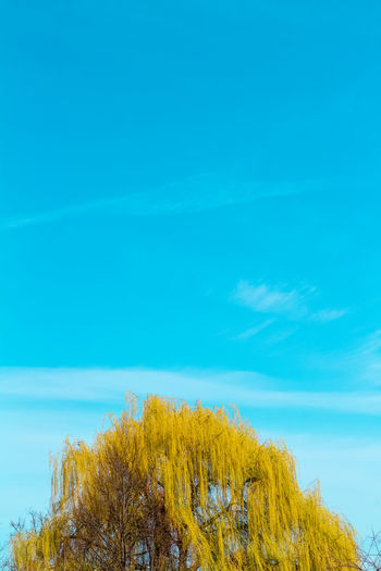 Blue Plant Sky Beauty In Nature Yellow Tranquility Nature Tranquil Scene Growth Day Scenics - Nature No People Tree Cloud - Sky Water Outdoors Sea Sunlight Freshness Turquoise Colored