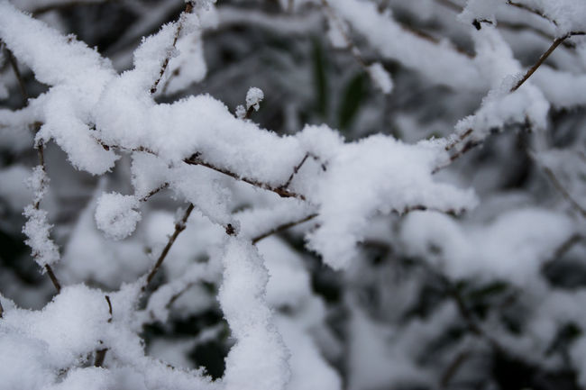 Backgrounds Beauty In Nature Branch Close-up Cold Temperature Florapark Nature No People Outdoors Snow Snowy Tree Tree Winter Winters Day
