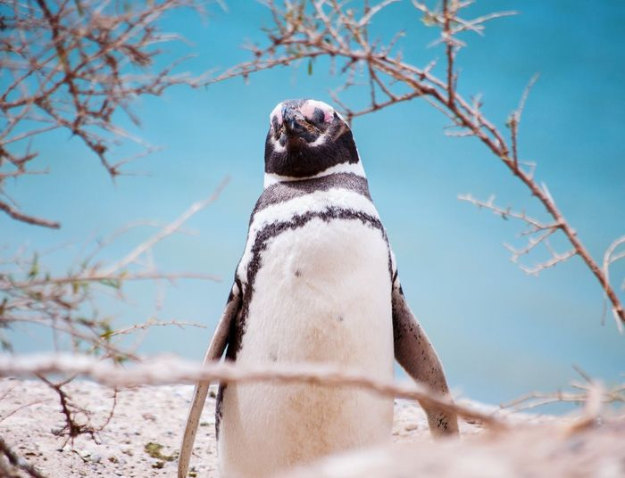 Low angle view of penguin on snow covered field