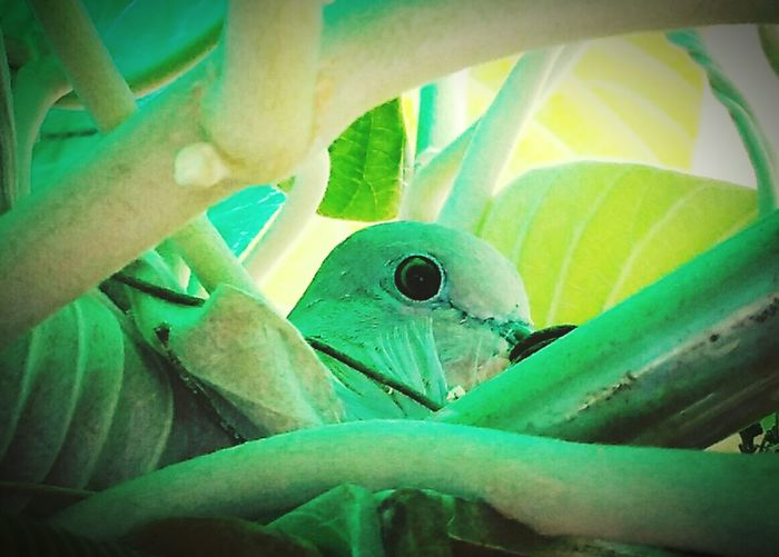 Bird Photography 🐤🐥 Birds Of EyeEm  Eye Of The Bird In My House 😊 Birdwatching Birds_collection