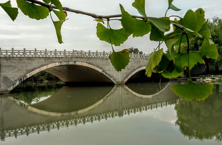 Reflection Water Bridge - Man Made Structure Tree City Sky China In My Eyes China Photos China View Parkscapes China Culture Outdoorshot Outdoor Pictures Ginkobiloba Ginko Biloba Ginkgo Tree Ginkobaum Ginko Autumn River Bridgesaroundtheworld Bridge Over The River Bridge Porn Bridgeview Bridge Architecture