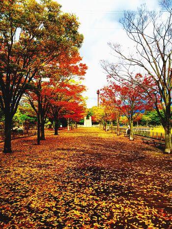 枯葉の絨毯 枯葉 絨毯 秋 Autamn