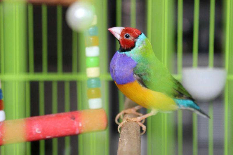 Bird collor Bird Birds🐦⛅ Collor Pets Birdcage Tropical Bird Animals In Captivity Captive Animals