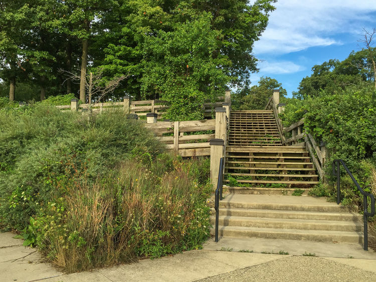 Park stairs and decks Elizabeth Park Growth Lush Greenery Nature No People Outdoors Staircase Stairway Steps Steps And Staircases Tree Verdant Wood Deck