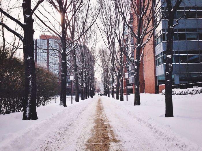 Winter White By CanvasPop Vscocam Snow The Environmentalist – 2014 EyeEm Awards