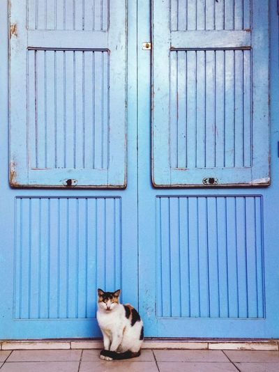 Cat Sitting Against Blue Door