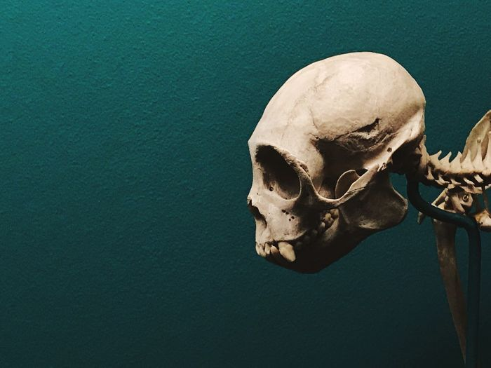 Close-Up Of Human Skull Against Green Wall